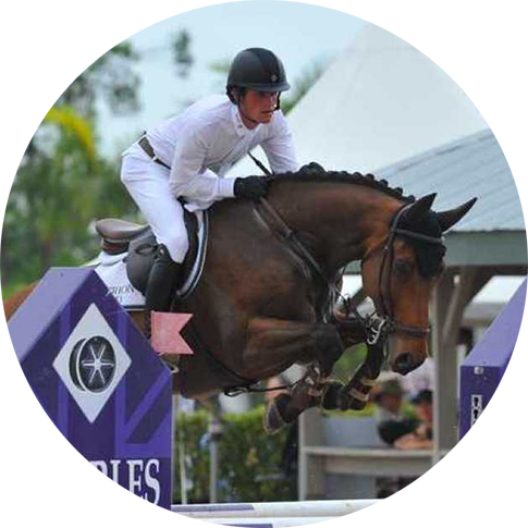 Show Jumper for Sale at Hyperion Stud