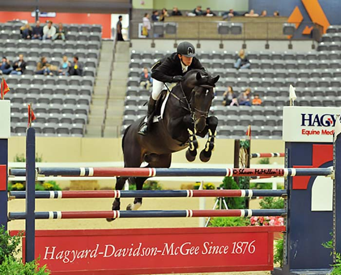 Victor E KWPN Show Jumping Stallion at Hyperion Stud Owned by Windsor Show Stables