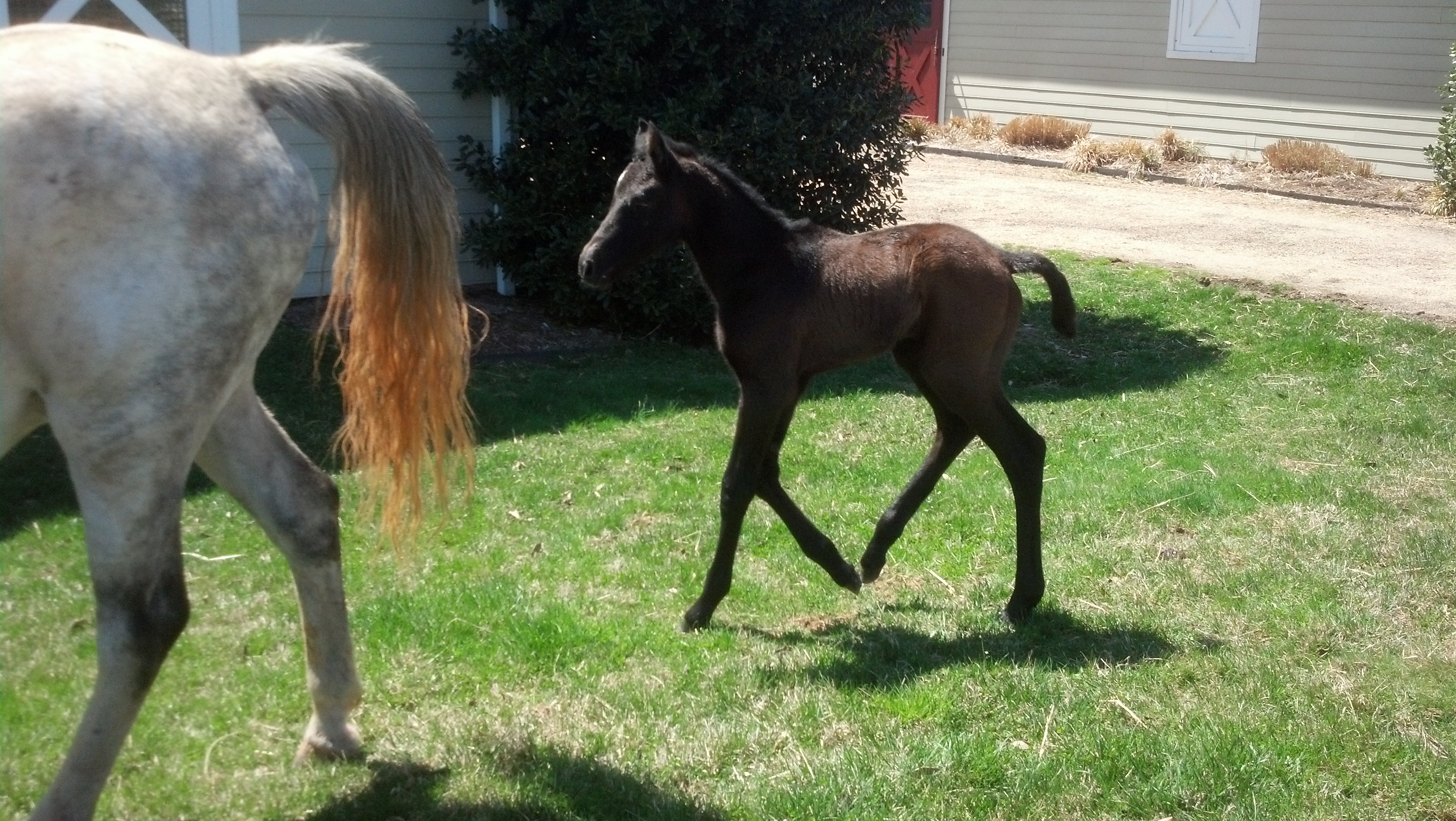 New 2014 Foals of Hyperion