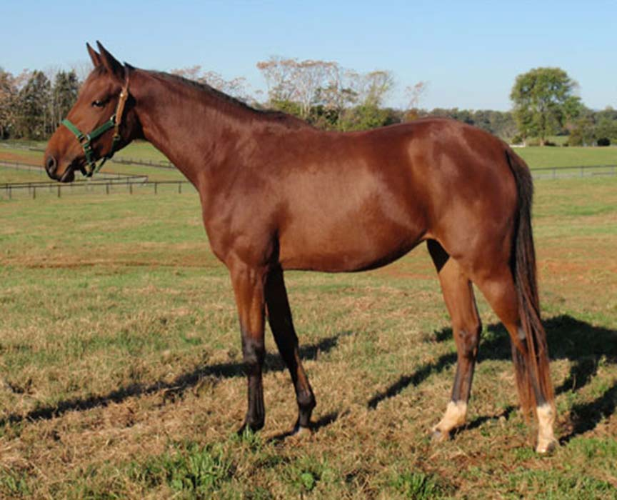 Hosteiner Filly by Quinar