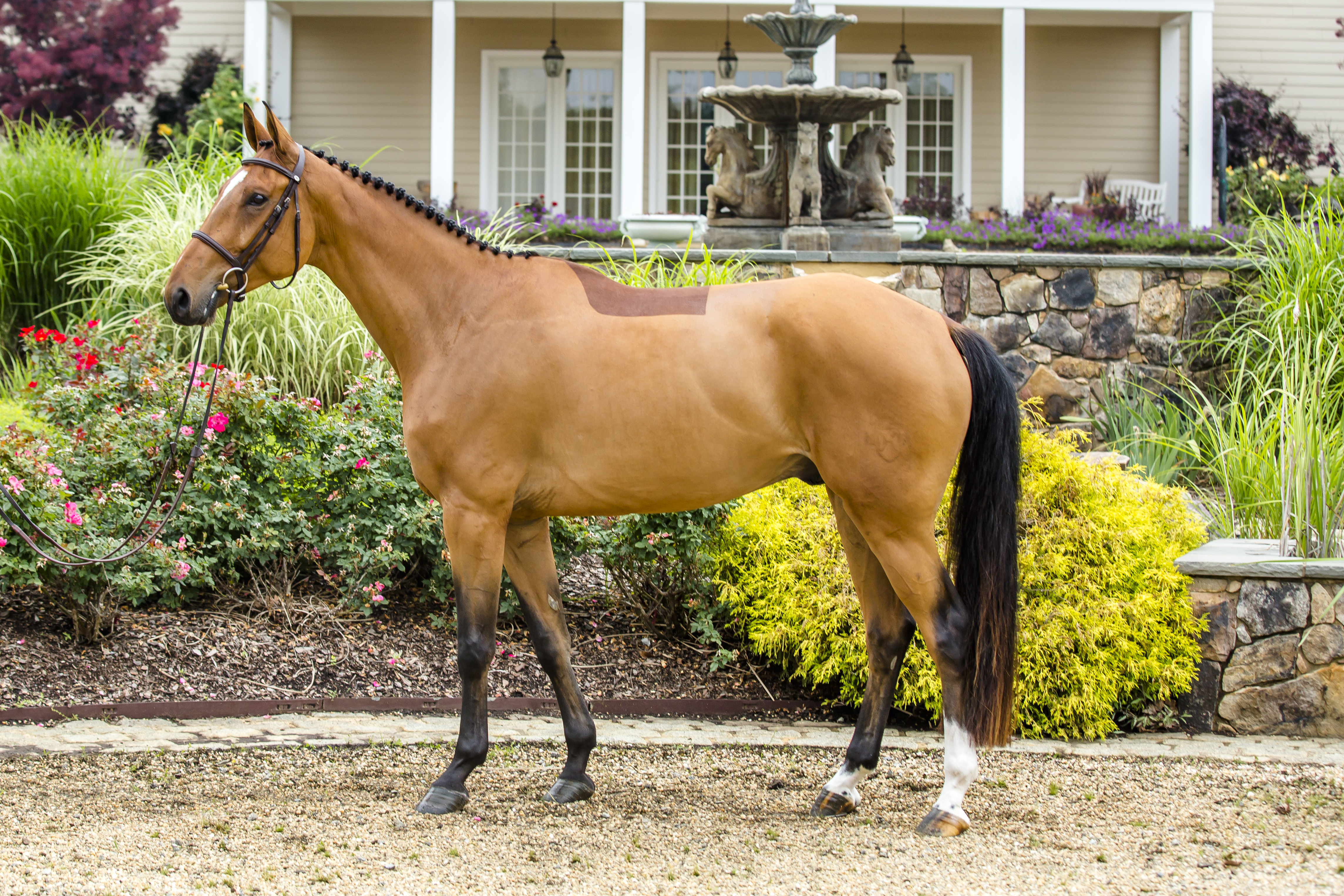 Show Jumping Prospect for Sale and Hyperion Stud Warmbloods and Sport Horses