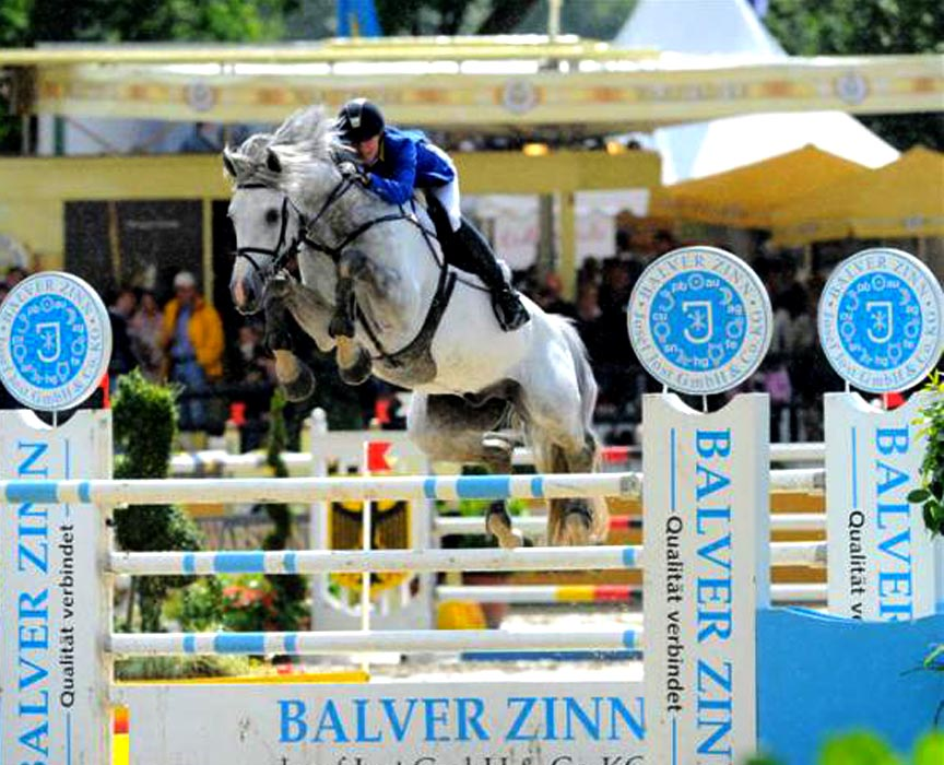 Asca Z Offspring for Sale at Hyperion Stud Show Jumping and Warmblood Stallions