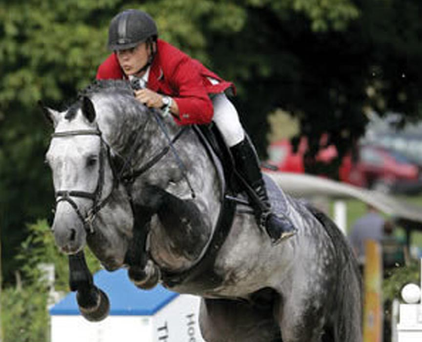 Contefino Offspring for Sale at Hyperion Stud Show Jumping and Warmblood Stallions