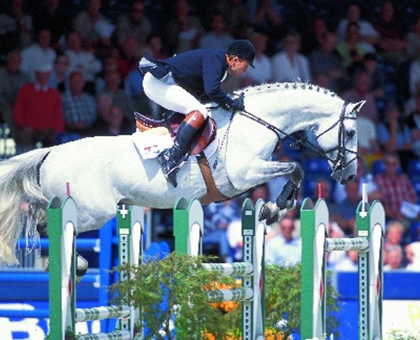 Corland Offspring for Sale at Hyperion Stud Show Jumping and Warmblood Stallions