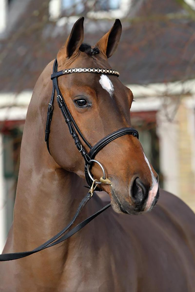 Hyperion Stud European Warmblood and Sport Horse Breeder