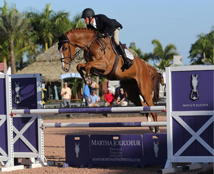 VDL Show Jumper for Sale at Hyperion Stud Warmbloods and Sport Horses