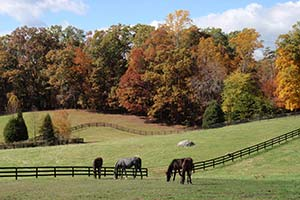 virginia-horse-pasture-fall-trees-rolling-hills-hyperion-stud-virginia