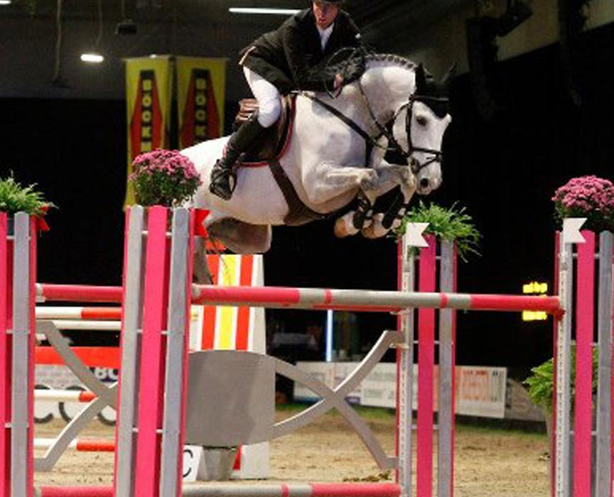 Zirocco Blue Offspring for Sale at Hyperion Stud Show Jumping and Warmblood Stallions